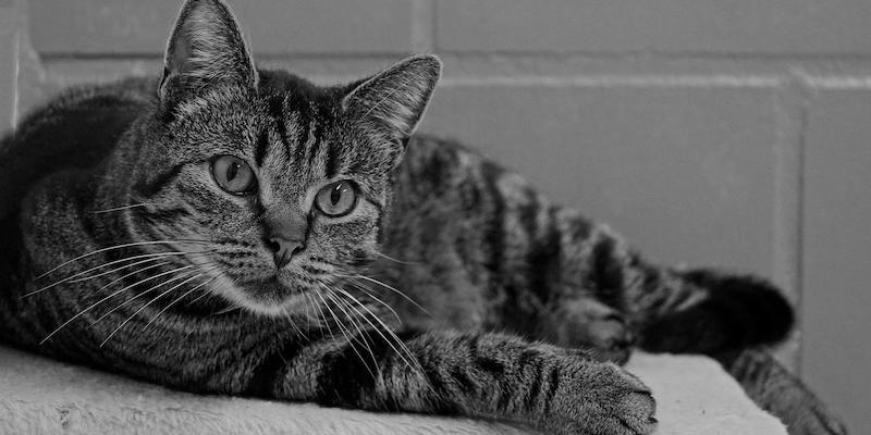 Adoptie katten op afspraak