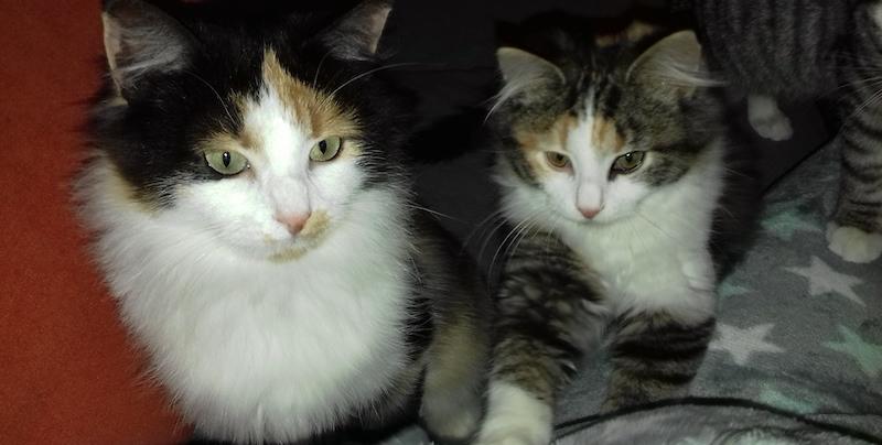 Lucy en Yara