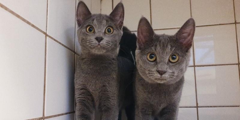Blair en Lyla