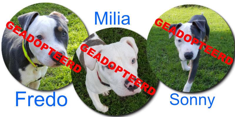 Fredo, Milia en Sonny