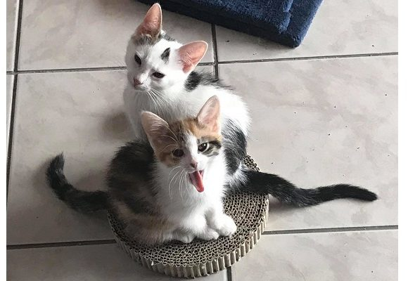 Mila en Joppe