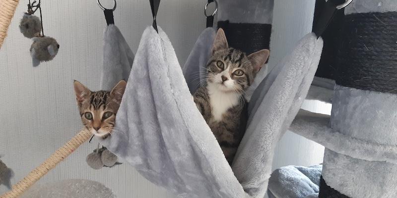Whoopie en Jerry