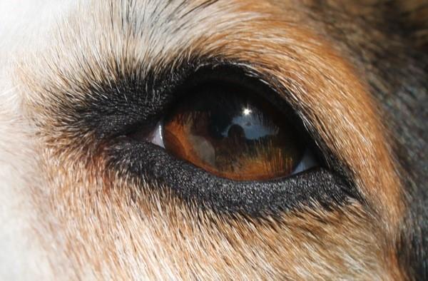 Werelddierendag 4 oktober, we vragen alle dierenvrienden om steun xxx