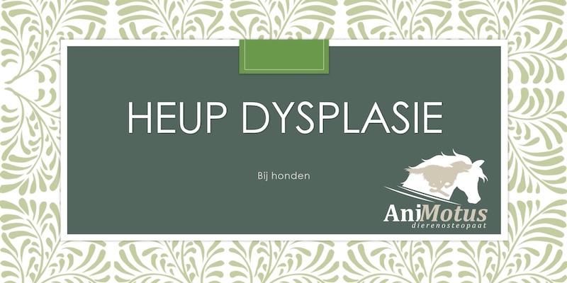 Heup dysplasie bij honden