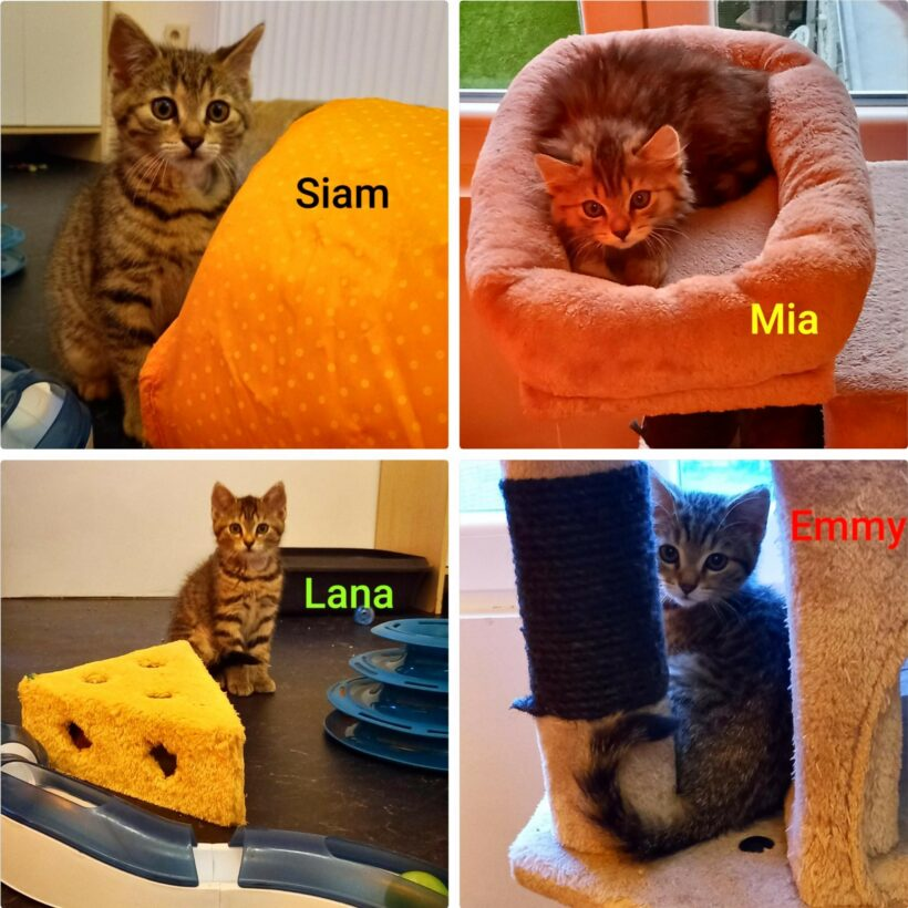 Emmy, Liam, Lana & Mia